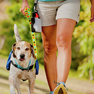 free-dog-training-ictcrop-m