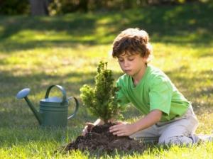 Boy Planting Tree fr JS Stock