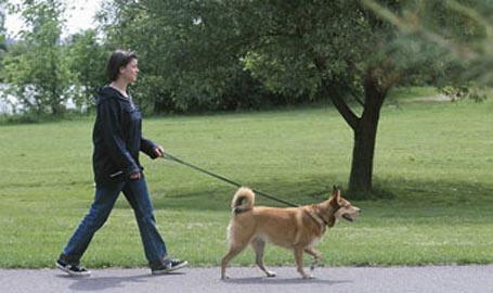 walk-a-dog
